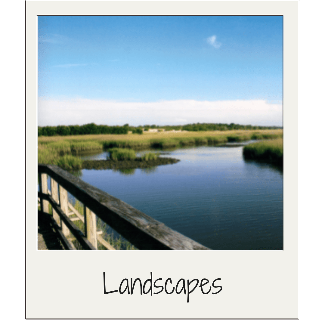 Landscape/River and Marsh